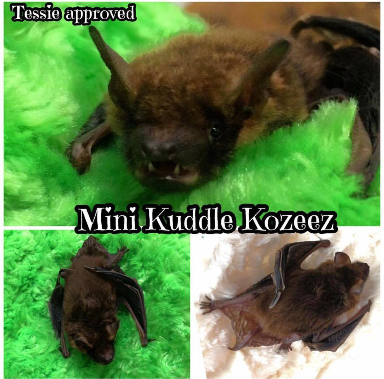 0190-bat-in-mini-kuddle-koozee