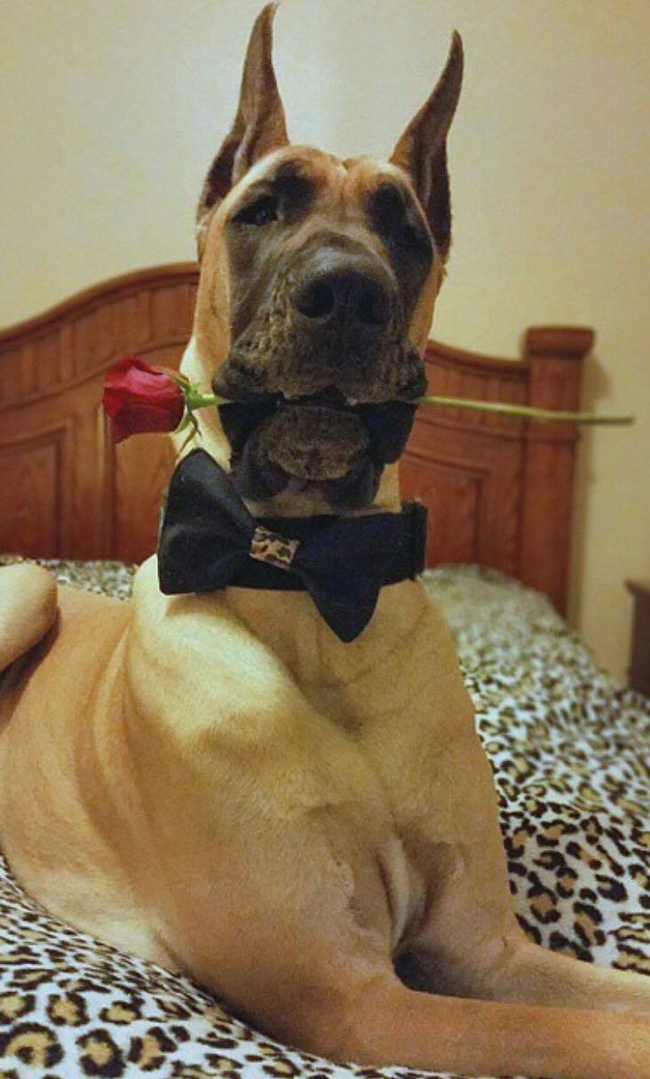 0330-dog-with-rose