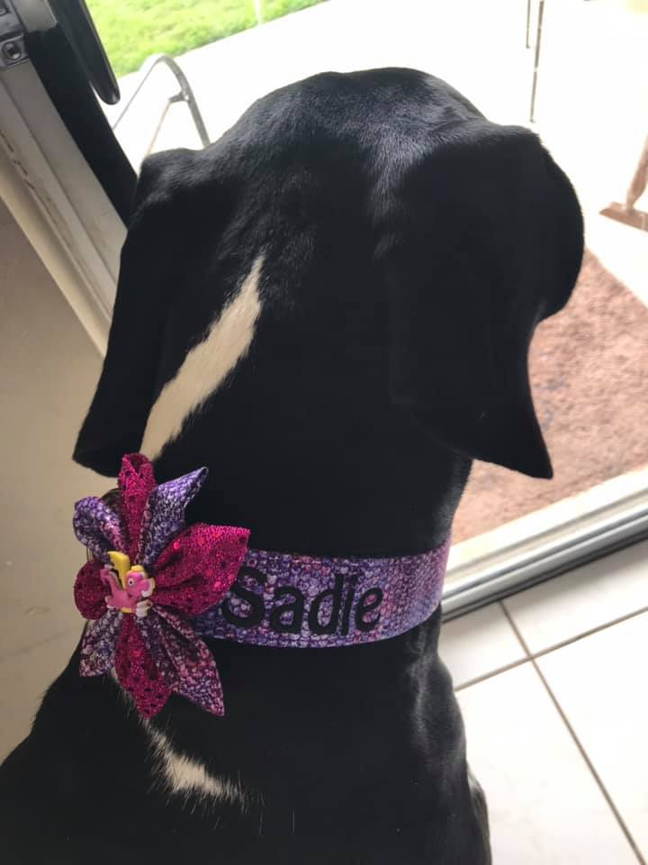 Sadie in a collar and flower