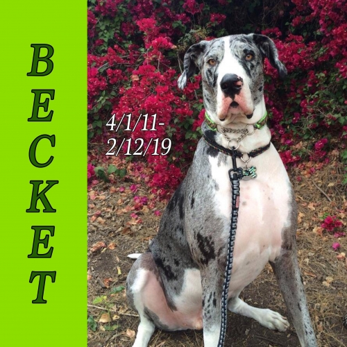 becket-the-therapy-dane.jpg